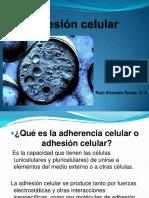 Adhesioncelular Raulalvarado 120728215303 Phpapp02