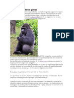 Características de Los Gorilas