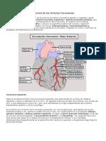 Anatomia - Art Coronarias