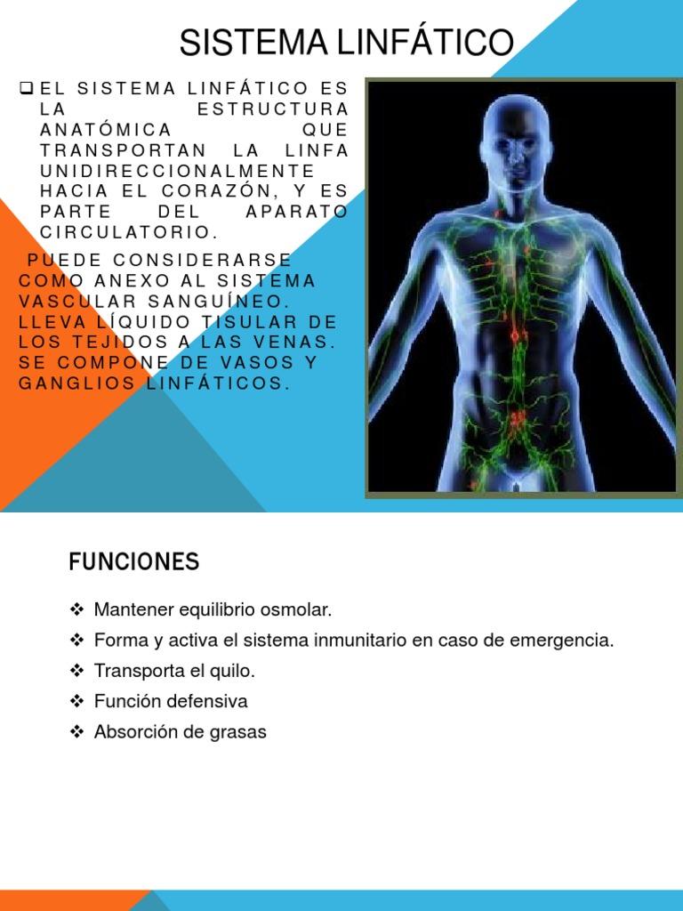 Asombroso Anatomía Y Fisiología Para Colorear Libro Responde Sistema ...