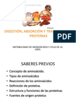 Clase 11-Digestion Absorcion y Transporte de Proteinas-final