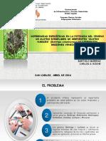 PRESENTACIÓN PROYECTO SERPIENTES (BARTOLO-ROCHE-ESTAS).pptx