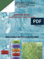 BRACHIARIA MUTICA