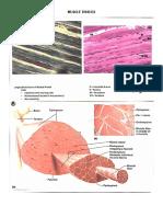 Muscle & Nervous (1)