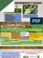 Cultivos Trasgenicos y Plagas