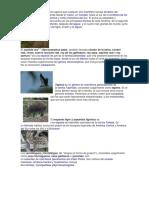animales en peligros de exinticion.docx