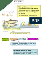 reproduccionanimal2a-121129202714-phpapp02