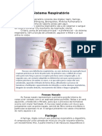 Resumo Anatomia Sistema Respiratório