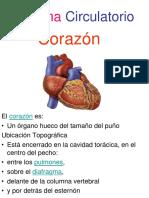 Sistema Circulatorio Coraz