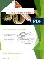 Hemicordados-Cordados