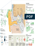 2016 Infografico Implante Coclear