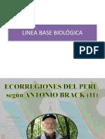 Linea Basebiológica