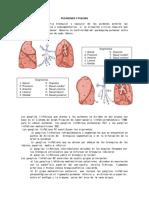 Pulmones , Pleura, Mediastino y Esofago