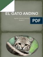El Gato Andino