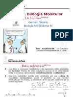 gtp_t1.biología_molecular__6ª_parte_enzimas__2015-17