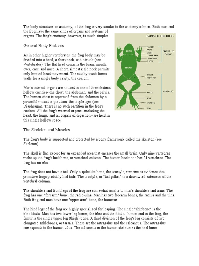 Frog\'s Anatomy | Anatomical Terms Of Motion | Foot