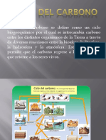 CICLO-DEL-CARBONO (1)