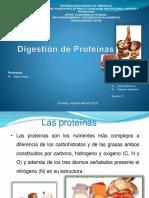 digestion o metabolismo de los aminoacido.pptx