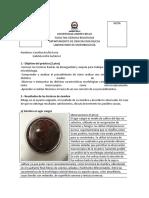 Informe 1 - BIO251 - 2018