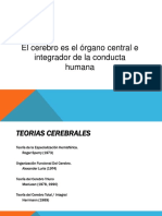 Teorc3ada de La Especializacic3b3n Hemisfc3a9rica de Sperry