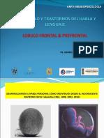 Lenguajeylobulofrontal 111205190521 Phpapp01 (1)