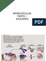 Biomoléculas Parte 1 Azucares