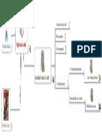 Docslide.com.Br Mapa Mental Financiamento Do Sus