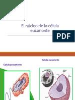 CUARTO MEDIO Ppt Biologia