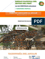 Expocicion Del Cultivo de Aguaje 2