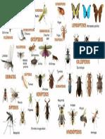 Los Insectos Ordenes1
