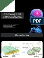Desarrolo del sistema nervioso (Desde la gastrulacion)