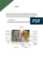 Características Fisiológicas Particular(Parte de Metodologia)