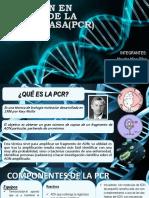 Reacción en Cadena de La Polimerasapcr (1)