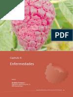 Cultivos de frambuesa3