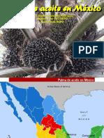 Rodriguez_Palmicultura_en_Mexico.pdf