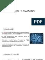 Citosol y Plásmido