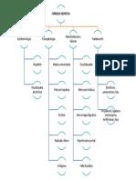 Mapa Conceptual Cirrosis Hepatica