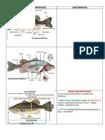 Anatomía y Medidas Importantes