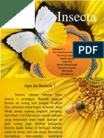 Kelompok 4 - Insecta