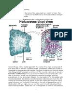 Dicot-monocot Stem Anatomy