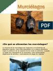 Presentacin de Los Murcilagos