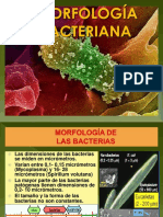 Clase 2- Morfología Bacteriana