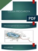Célula Protista