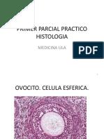 primerparcialpracticohistologia-130515102423-phpapp01.pdf