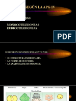 Fanerogamas - Clase 4