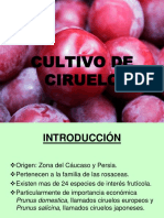 241511998-PresentacionCIRUELA