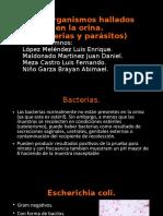 Microorganismos Presentes en La Orina
