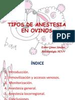 Tipos de Anestesia en Ovejas Esther Gómez
