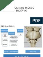 Anatomia de Tronco Encéfalo