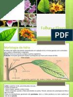 folhaseflores